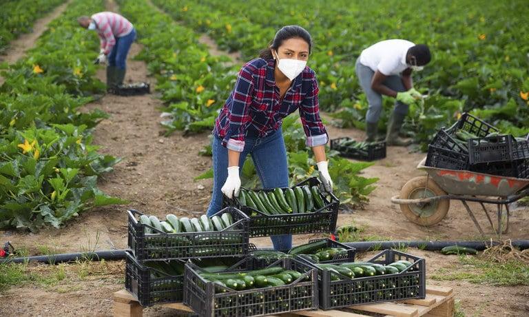 Dia Nacional do Agricultor é comemorado hoje